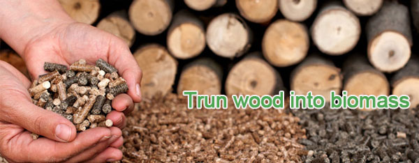 Trun wood into biomass